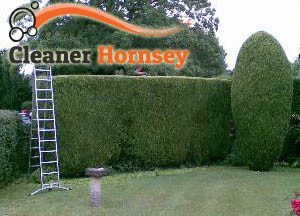 Hedge Maintenance Hornsey